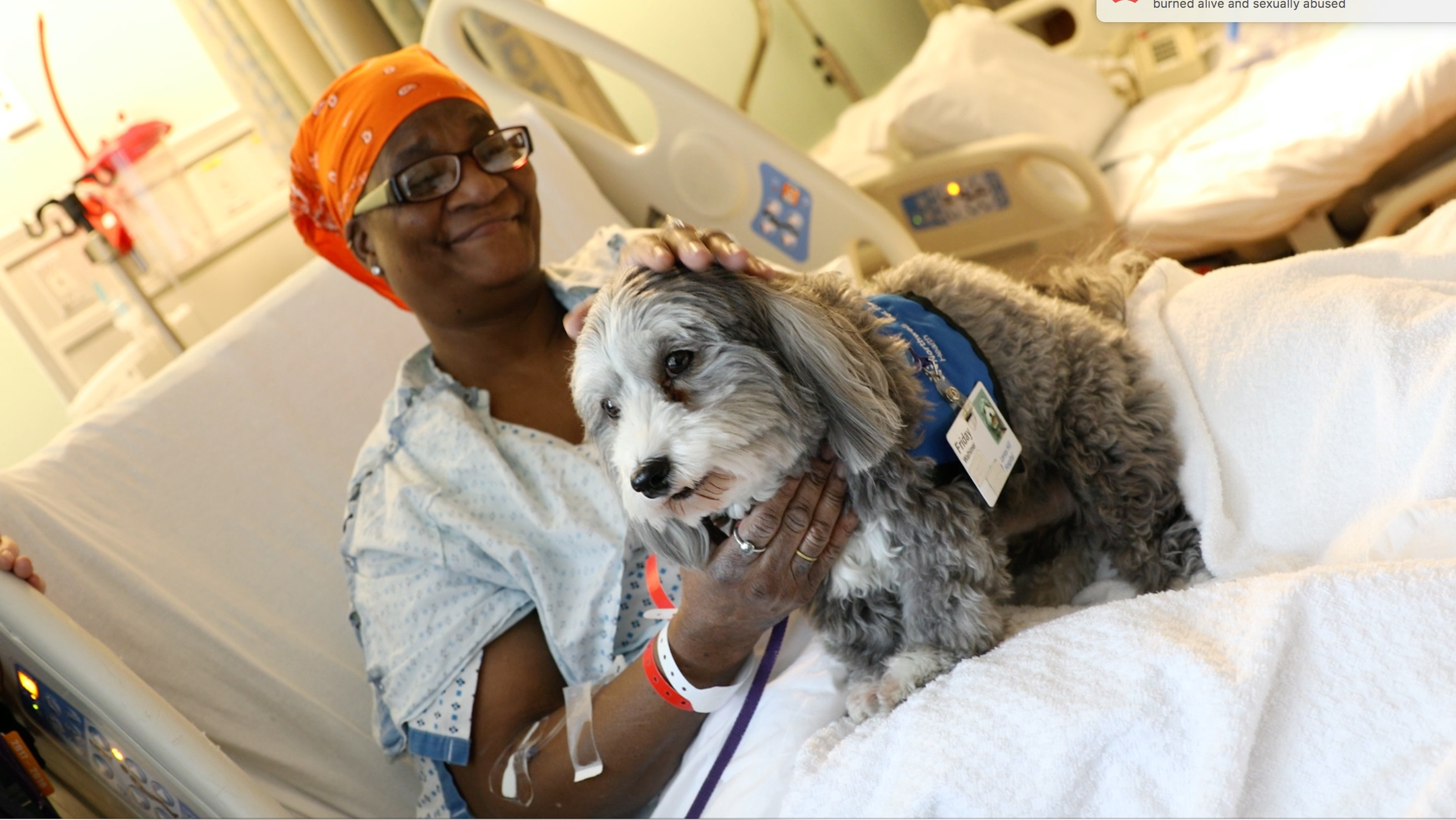 New York Therapy Animals | Excellence Through Education